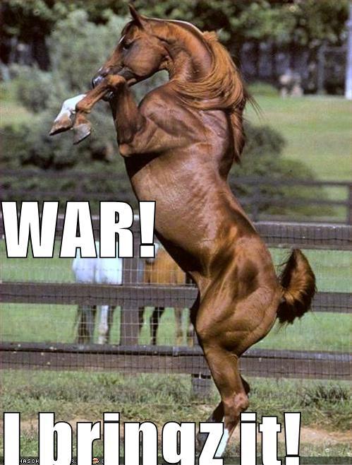 you tube funny. you tube funny horse