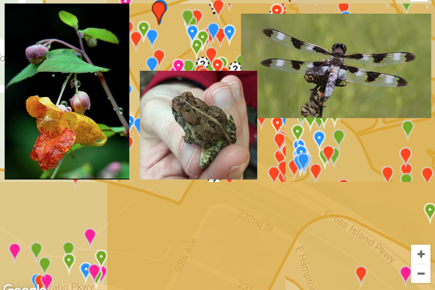 Collage of plant and animals